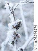 Замерзший репейник. Стоковое фото, фотограф Инна Остановская / Фотобанк Лори