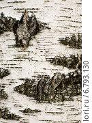 Купить «Березовая кора», фото № 6793130, снято 20 сентября 2014 г. (c) Дмитрий Жуков / Фотобанк Лори