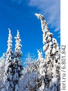 Купить «Зимний лес с заснеженными деревьями на фоне голубого неба», фото № 6801842, снято 2 февраля 2014 г. (c) Евгений Ткачёв / Фотобанк Лори