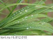 Капли воды на траве крупным планом. Стоковое фото, фотограф Виктор Васин / Фотобанк Лори