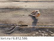 Опавший лист на досках, покрытых инеем. Стоковое фото, фотограф Екатерина Ярославовна Мостовая / Фотобанк Лори