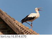 Rühstädt, Germany, stork on a roof. Стоковое фото, агентство Caro Photoagency / Фотобанк Лори