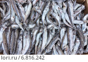Купить «Замороженная рыба», фото № 6816242, снято 16 декабря 2014 г. (c) Насыров Руслан / Фотобанк Лори
