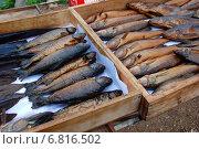 Купить «Копченая рыбка домашнего приготовления, пойманная на озере Селигер Тверской области», эксклюзивное фото № 6816502, снято 3 сентября 2011 г. (c) lana1501 / Фотобанк Лори