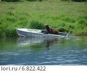 Медведь в лодке. Редакционное фото, фотограф Анна Никольская / Фотобанк Лори