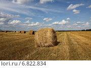 Купить «Рулон соломы», фото № 6822834, снято 16 августа 2014 г. (c) Кочеткова Галина / Фотобанк Лори
