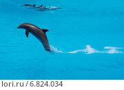 Бегущий по волнам дельфин. Стоковое фото, фотограф Вячеслав Строганов / Фотобанк Лори