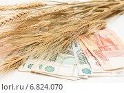 Деньги и колосья. Стоковое фото, фотограф Андрей Черников / Фотобанк Лори