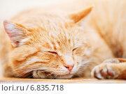 Купить «Портрет спящего спокойного рыжего кота», фото № 6835718, снято 24 ноября 2014 г. (c) g.bruev / Фотобанк Лори