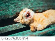 Купить «Рыжий котенок зевает, лежа на старой скамейке в парке», фото № 6835814, снято 5 июня 2014 г. (c) g.bruev / Фотобанк Лори