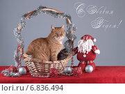 Кошка в корзине. Стоковое фото, фотограф Елена Беззубцева / Фотобанк Лори