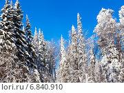 Купить «Зимний лес солнечным днем», фото № 6840910, снято 2 февраля 2014 г. (c) Евгений Ткачёв / Фотобанк Лори
