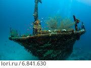 Купить «Затонувший корабль на морском дне», фото № 6841630, снято 11 февраля 2013 г. (c) Сергей Дубров / Фотобанк Лори