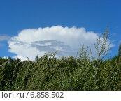 Купить «Заросли полыни горькой (лат. Artemísia absínthium) на фоне голубого неба с облаком красивой формы», эксклюзивное фото № 6858502, снято 20 июля 2012 г. (c) lana1501 / Фотобанк Лори