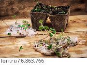 Купить «Пророщенные семена в марле и торфяные горшки», фото № 6863766, снято 4 января 2015 г. (c) Николай Лунев / Фотобанк Лори