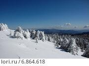 Заснеженные елки на склоне горы Олимпус, Тродос, Кипр в январе на фоне гор и голубого неба в ясный солнечный день (2012 год). Стоковое фото, фотограф Алтанова Елена / Фотобанк Лори