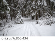 Купить «Снегопад в лесу», эксклюзивное фото № 6866434, снято 5 января 2015 г. (c) Елена Коромыслова / Фотобанк Лори