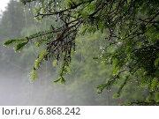 Туман. Стоковое фото, фотограф Прошина Оксана / Фотобанк Лори