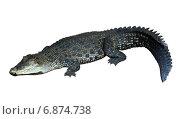 Купить «Saltwater crocodile (Crocodylus porosus)», фото № 6874738, снято 16 июля 2019 г. (c) Яков Филимонов / Фотобанк Лори