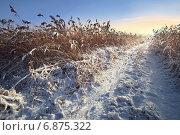 Солнечная дорога. Стоковое фото, фотограф Андрей Соколов / Фотобанк Лори