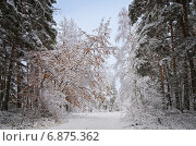 Листва под снегом. Стоковое фото, фотограф Андрей Соколов / Фотобанк Лори