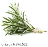 Купить «rosemary herb spice leaves isolated on white background cutout», фото № 6876522, снято 8 января 2014 г. (c) Natalja Stotika / Фотобанк Лори