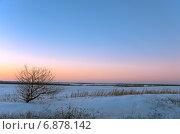 Дикая яблоня, растущая в поле, на закате. Стоковое фото, фотограф Валерий Боярский / Фотобанк Лори