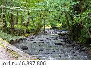Купить «Горная река в лесу», фото № 6897806, снято 6 июля 2013 г. (c) Евгений Ткачёв / Фотобанк Лори
