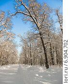 Купить «Тропа здоровья в городе Пензе солнечным зимним днем», фото № 6904702, снято 26 января 2014 г. (c) Григорий Белоногов / Фотобанк Лори