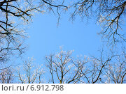 Купить «Кроны деревьев в инее на фоне голубого неба», фото № 6912798, снято 29 декабря 2014 г. (c) Сергей Куров / Фотобанк Лори