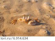 Краб в песке на пляже. Стоковое фото, фотограф Вадим Козуренко / Фотобанк Лори