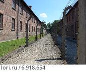 Освенцим. Аушвиц 1. Основная дорога между бараками для размещения пленных (2014 год). Стоковое фото, фотограф Евгения Бугас / Фотобанк Лори
