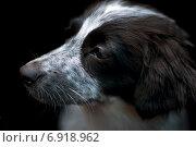 Грустная дворняга на черном фоне. Стоковое фото, фотограф Вотякова Ирина / Фотобанк Лори
