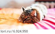 Купить «Серый кот лежит на кровати», фото № 6924950, снято 18 января 2015 г. (c) Валерия Потапова / Фотобанк Лори