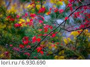 Оснняя листва. Стоковое фото, фотограф Григорий Бледных / Фотобанк Лори
