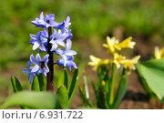 Купить «Цветущий гиацинт», фото № 6931722, снято 30 апреля 2011 г. (c) Tatiana Tetereva / Фотобанк Лори