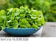 Свежий листовой салат в саду. Стоковое фото, фотограф Елена Веселова / Фотобанк Лори