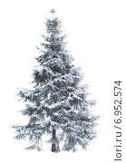Купить «Заснеженная ёлка», фото № 6952574, снято 11 декабря 2009 г. (c) Anatoly Maslennikov / Фотобанк Лори