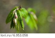 Купить «Молодая веточка березы в лесу весной», фото № 6953058, снято 21 апреля 2013 г. (c) Сурикова Ирина / Фотобанк Лори