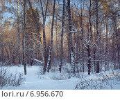 Купить «Зимний сказочный лес», фото № 6956670, снято 6 января 2015 г. (c) Самойлова Екатерина / Фотобанк Лори