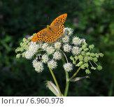 Купить «Бабочка на цветке», фото № 6960978, снято 18 июля 2013 г. (c) Wanda / Фотобанк Лори