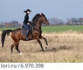 Девушка поздней осенью в поле на фоне зеленой травы тренирует гнедую лошадь по программе выездки. Стоковое фото, фотограф Елена Зенкович / Фотобанк Лори