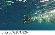 Купить «Люди снимают подводный мир», видеоролик № 6971826, снято 9 января 2015 г. (c) Михаил Коханчиков / Фотобанк Лори