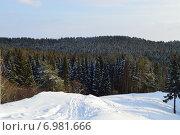 Зимний лес(спуск с горки) Стоковое фото, фотограф Марат Тайгильдин / Фотобанк Лори