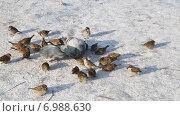 Купить «Городские птицы», видеоролик № 6988630, снято 8 февраля 2015 г. (c) Наталья Волкова / Фотобанк Лори