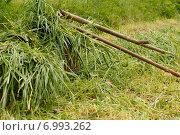 Скошенная трава в корзинах, грабли и коса. Стоковое фото, фотограф Ксения Семенова / Фотобанк Лори