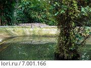 Крокодил лежит на бортике бассейна в зоопарке города Хошимин (Сайгонский зоопарк) (2014 год). Редакционное фото, фотограф Ольга Кирсанова / Фотобанк Лори