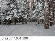 Тропинка в зимнем лесу в Московской области. Стоковое фото, фотограф Валерий Боярский / Фотобанк Лори