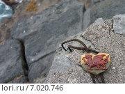 Дракон Уэльса, кулон лежит на камнях. Стоковое фото, фотограф Наталья Большакова / Фотобанк Лори