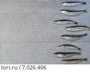 Свежие сардины на столе. Стоковое фото, фотограф Юлия Младич / Фотобанк Лори